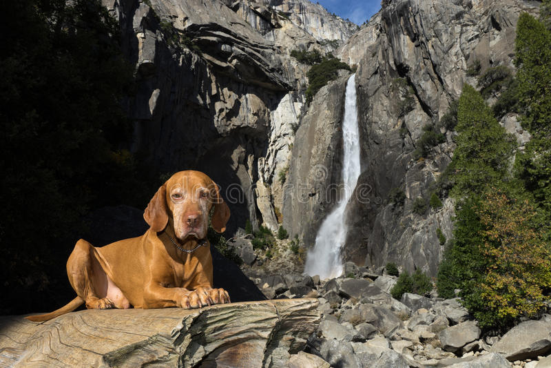 Hund vor Wasserfall lizenzfreies stockfoto