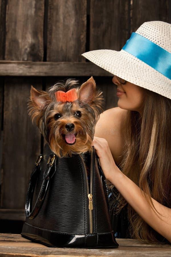 Hund Yorkshires Terrier in der Tasche stockfotos