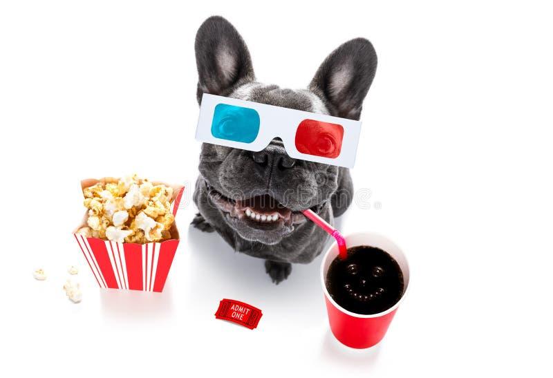 Hund zu den Filmen lizenzfreies stockbild