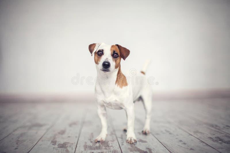 Hund zu Hause stockbild