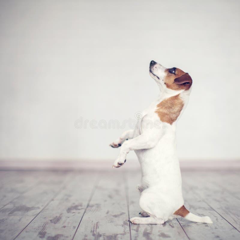 Hund zu Hause stockfotografie