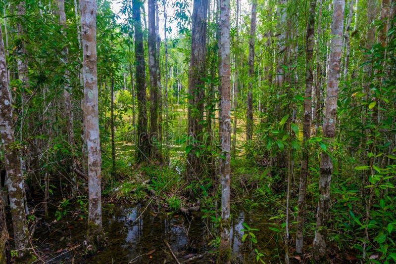 hunda en la selva tropical impenetrable de Krabi imágenes de archivo libres de regalías