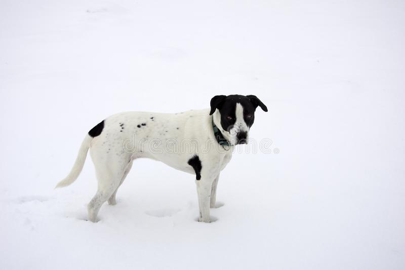 Hundanseende i snö fotografering för bildbyråer