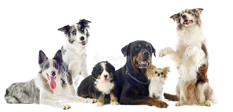 Hundar royaltyfri foto