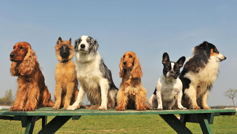 hundar fem little arkivfoton