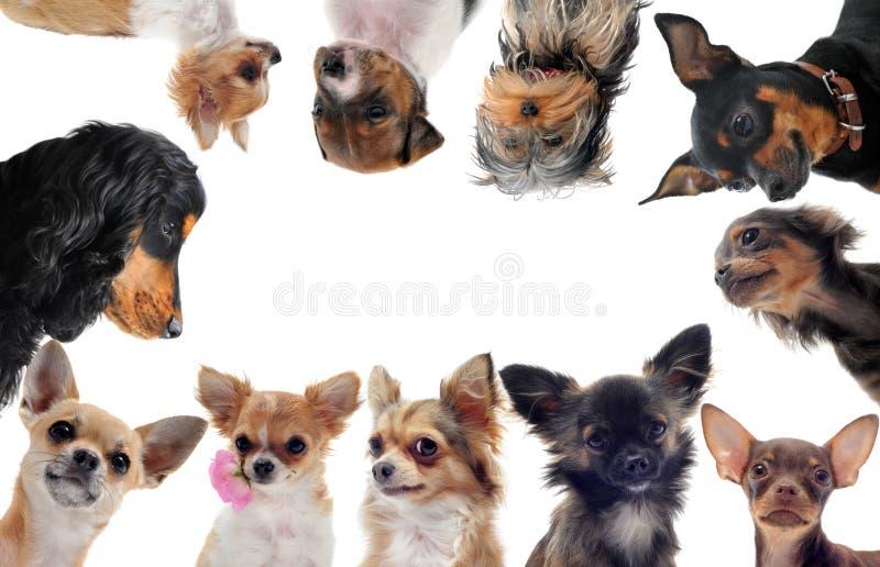 hundar grupperar little royaltyfri fotografi