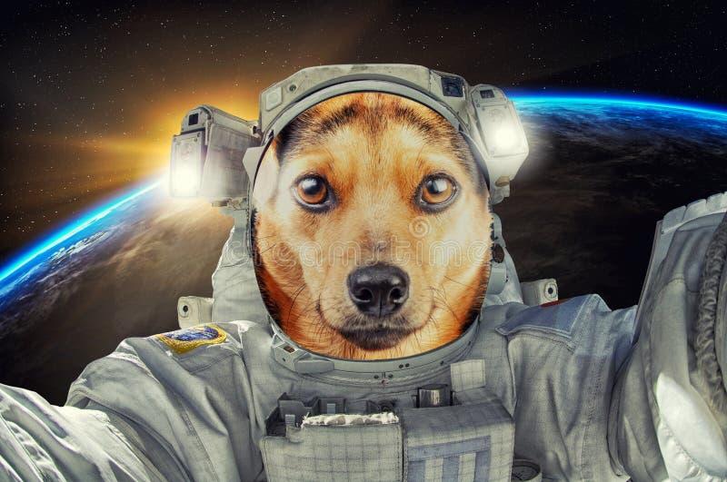 Hundastronaut eller kosmonaut för liten gullig stående som solbränd undersöker universumet arkivbild