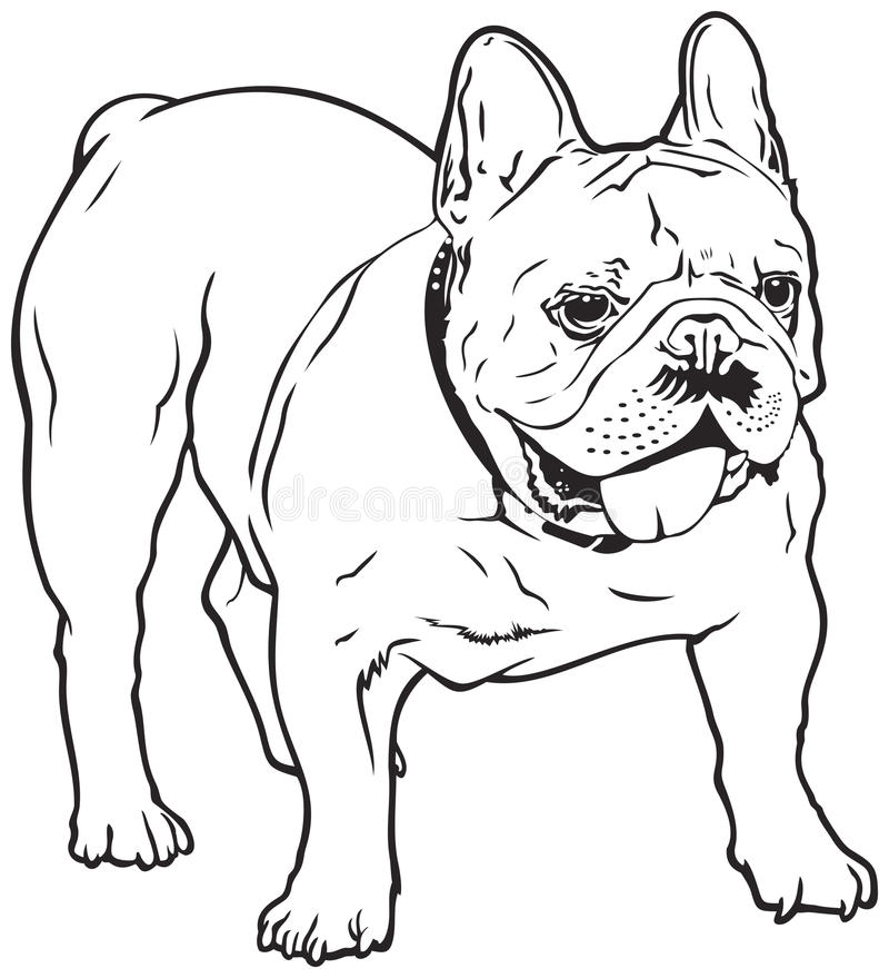 Hundavel för fransk bulldogg royaltyfri illustrationer
