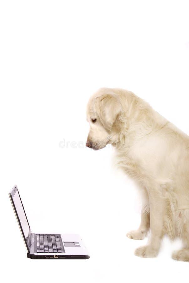 hundbärbar dator royaltyfri foto