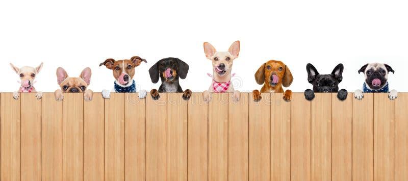 Hundbunke arkivbild