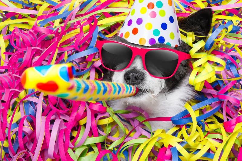 Hundcelberation för lycklig födelsedag arkivfoton