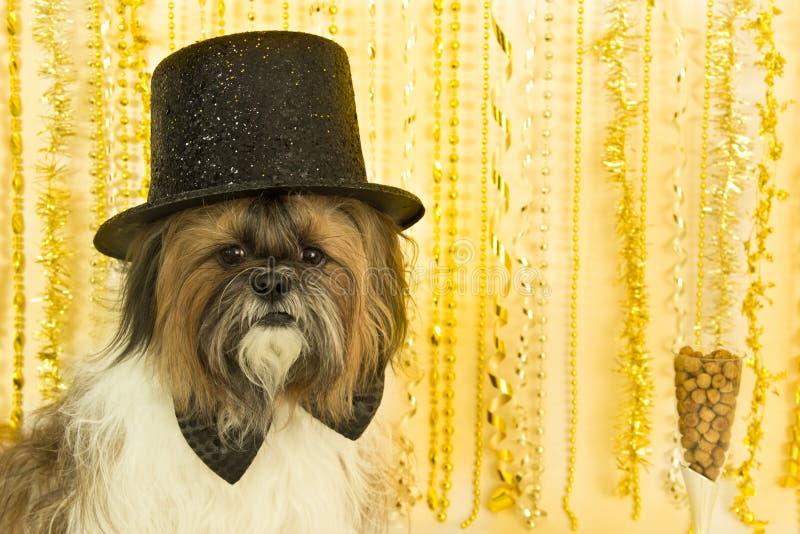 hunddeltagare royaltyfri foto