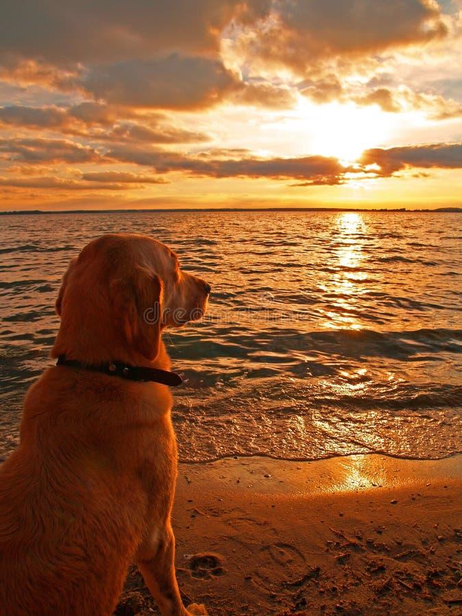 Hundeüberwachender Sonnenuntergang stockbilder
