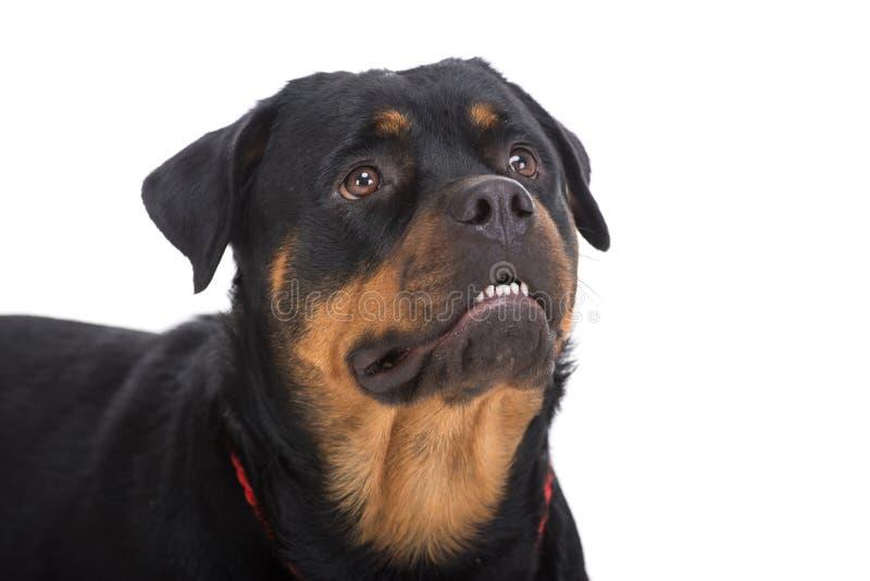 hunde stockbilder