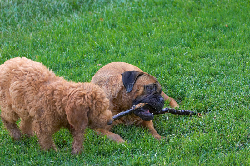 Hunde stockbild