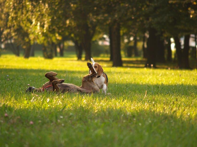 Hunde/bilden Spaß, Nicht Krieg Lizenzfreie Stockfotos