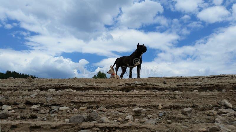 Hunde Chiko und Riko stockfotos