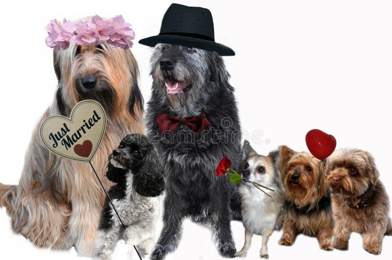 Hunde in der Liebe gerade verheiratetes Paar und Gäste lizenzfreie stockbilder