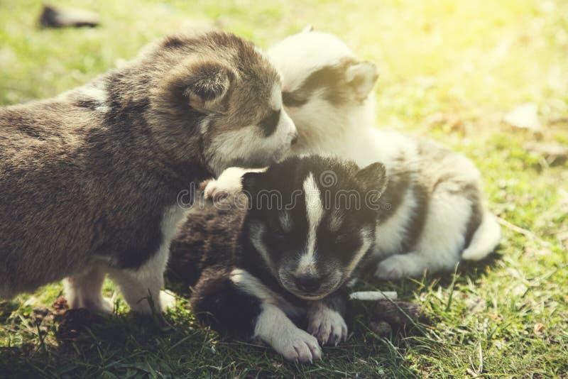 Hunde in der Natur lizenzfreie stockbilder