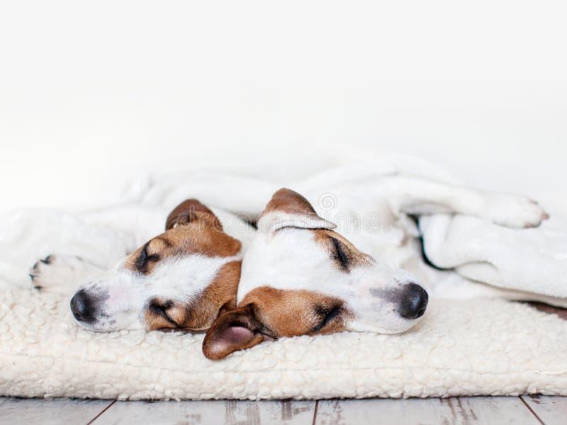 Hunde, die am Boden schlafen lizenzfreies stockbild