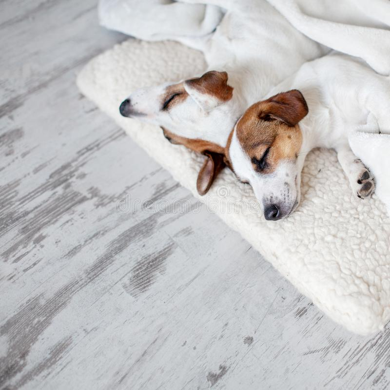 Hunde, die am Boden schlafen stockfotos