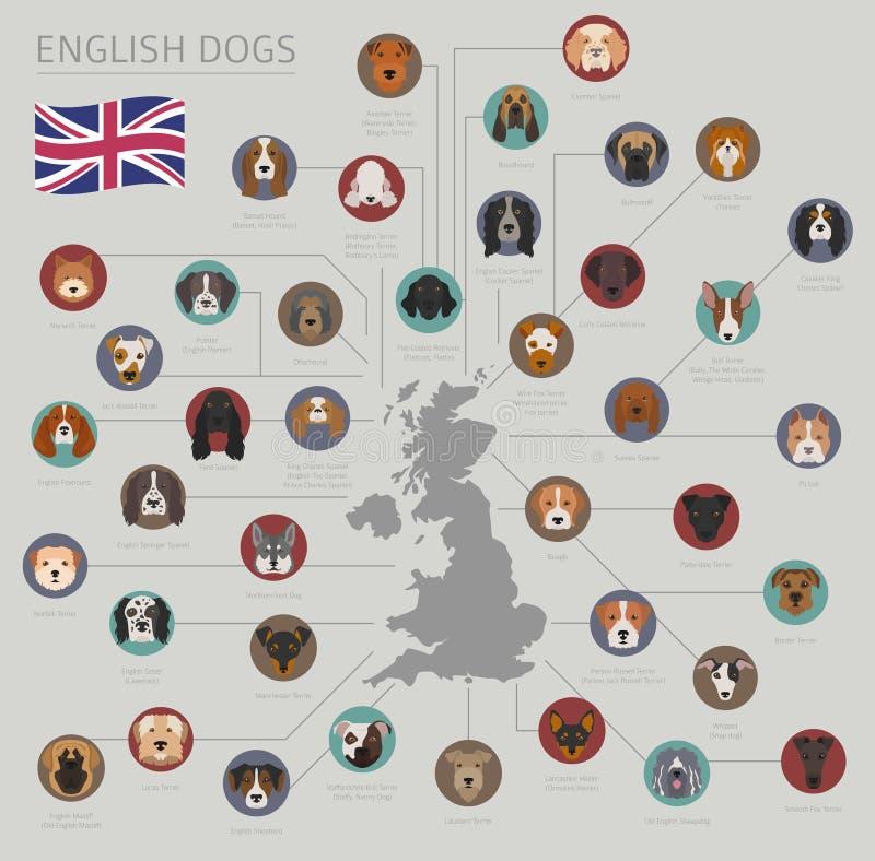 Hunde durch Ursprungsland Englische Hunderassen Infographic-templ lizenzfreie abbildung