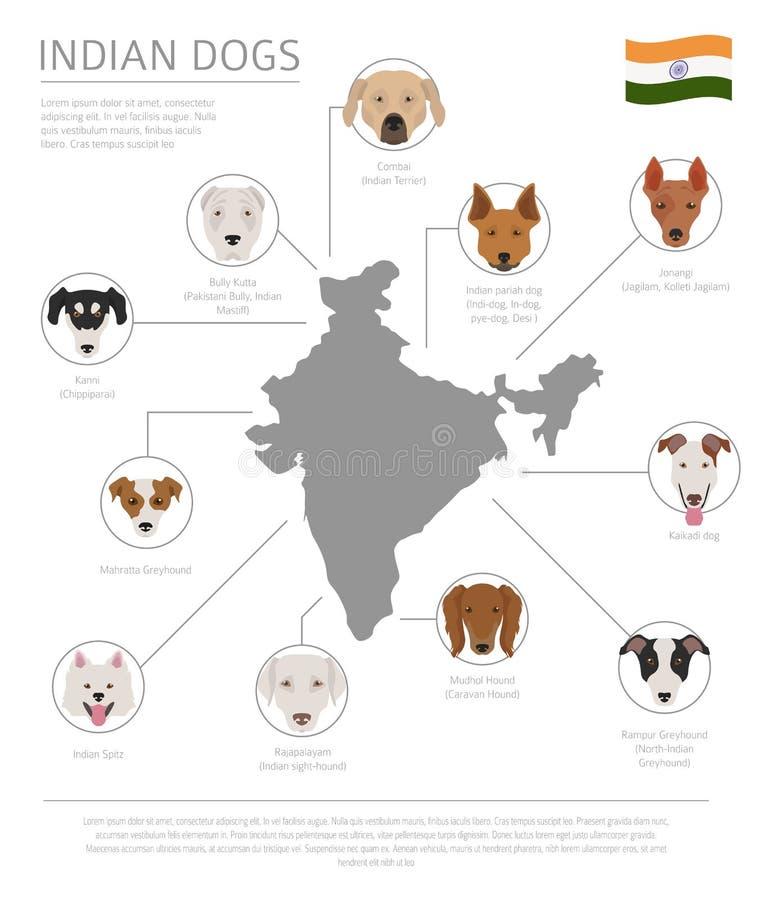 Hunde durch Ursprungsland Indische Hunderassen Infographic-templa lizenzfreie abbildung