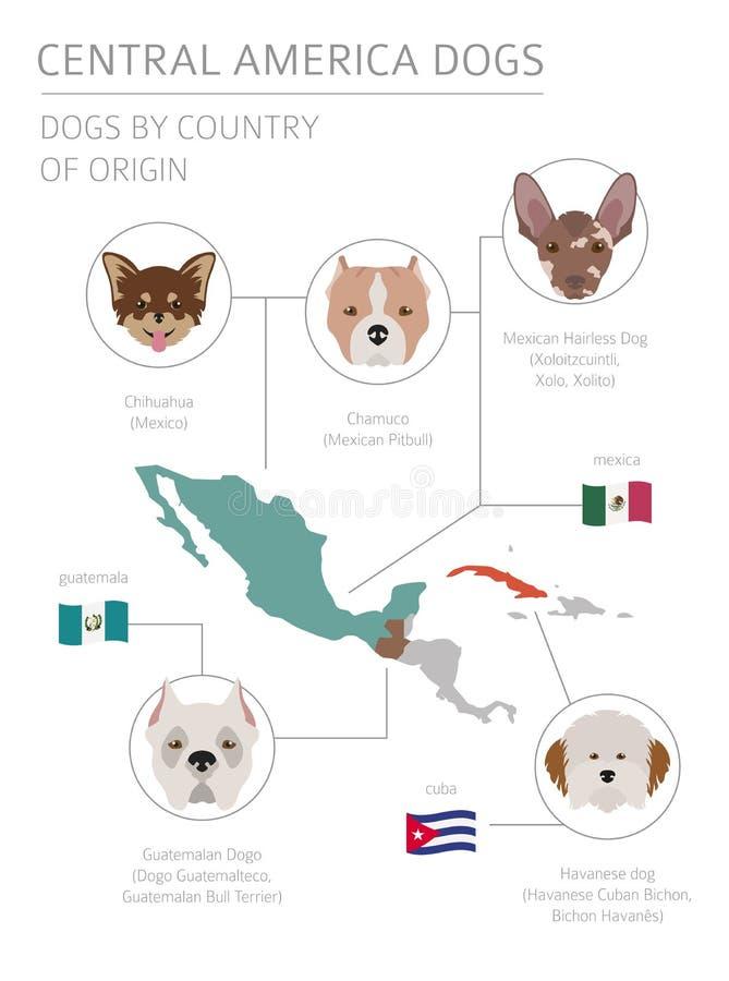 Hunde durch Ursprungsland Lateinamerikanische Hunderassen Infographi vektor abbildung