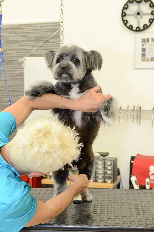 Hunde- Friseur in einer Schönheitsklinik mit Hund lizenzfreie stockfotografie
