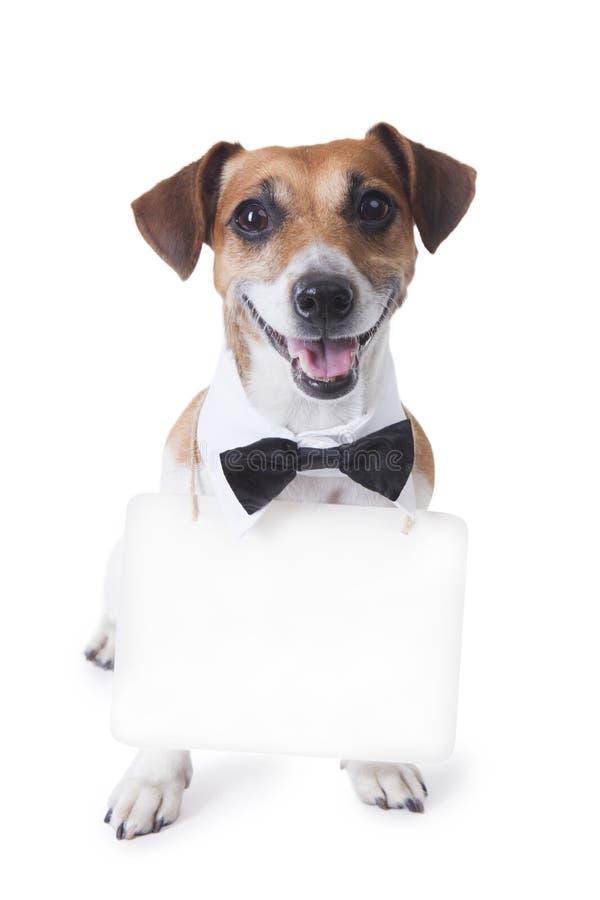 Hunde-Jack Russell-Terrier stockfotografie