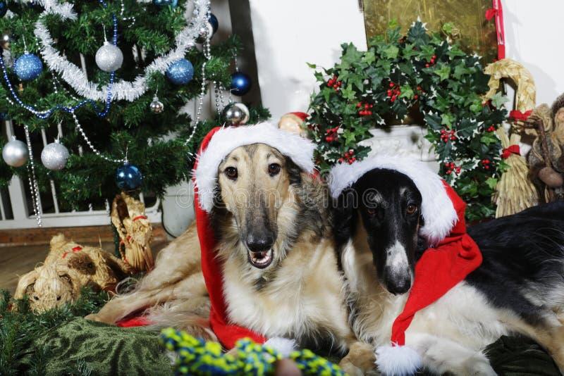 Hunde mit Weihnachtsgrüßen stockfotografie