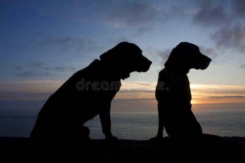 Download Hunde am Sonnenuntergang stockbild. Bild von tier, nord - 12201919
