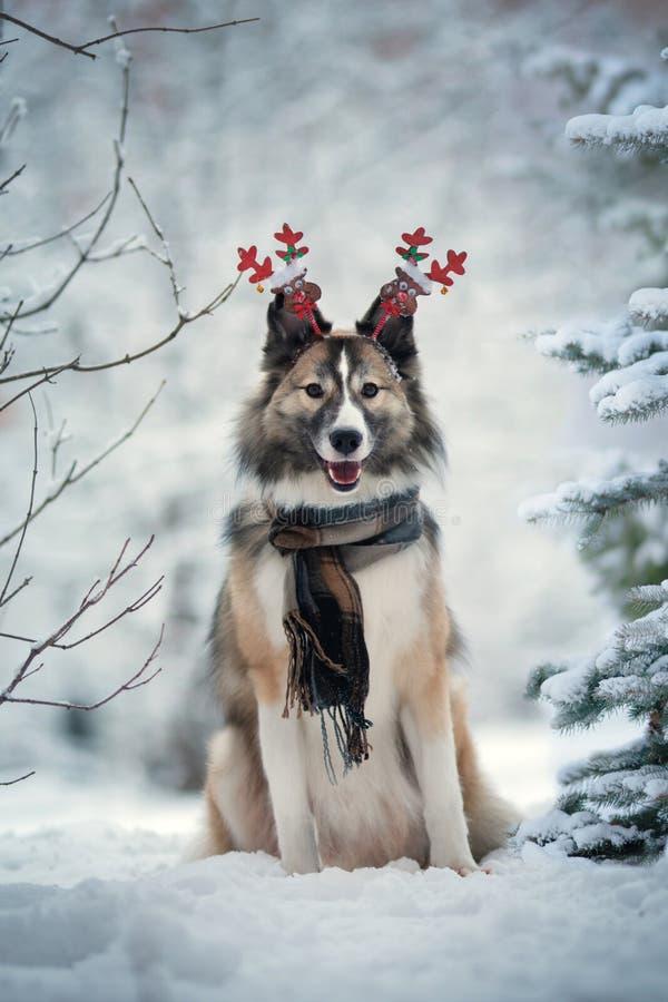 Hunde tragen Schal im Winterpark stockbilder