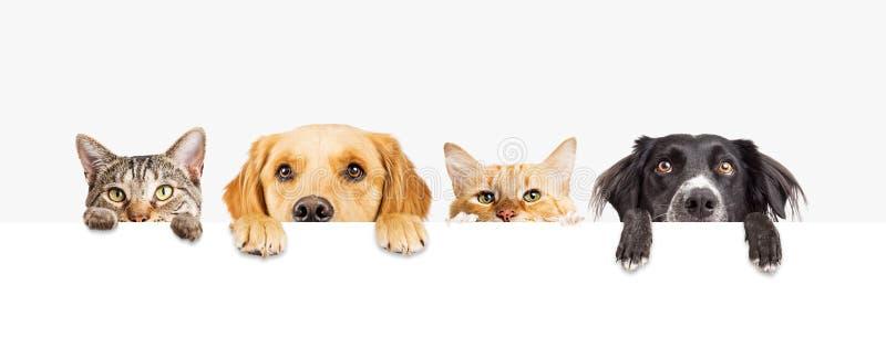 Hunde und Katzen, die über Netz-Fahne spähen stockbild