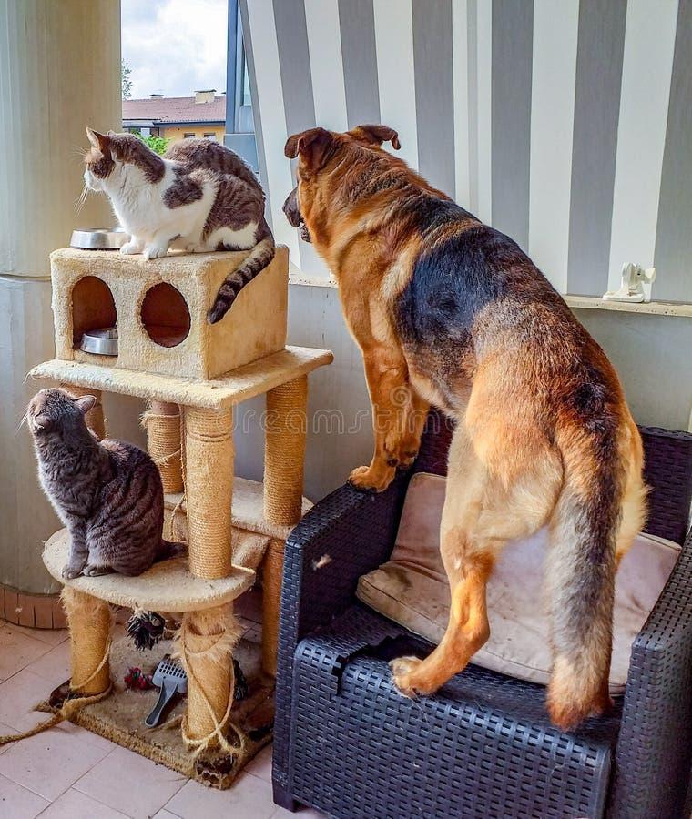 Hunde und Katzen, die sie sagten, erhalten nicht entlang ist hier ein Beispiel von, wie verschiedene Tiere koexistieren können de lizenzfreies stockbild