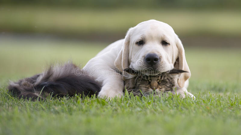 Hunde- und Katzenfreundschaft lizenzfreies stockfoto