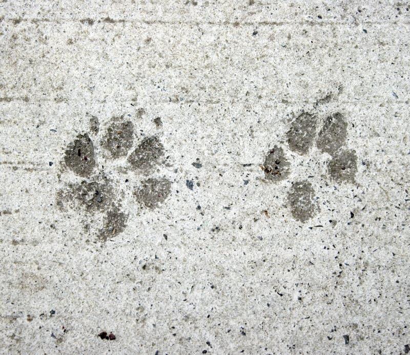 Hunde- und Katzetatzedrucke lizenzfreies stockfoto