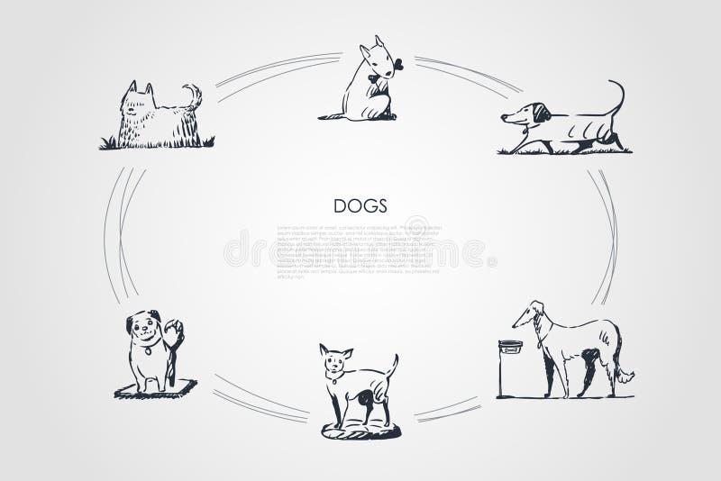Hunde - verschiedene Hunderassen, die, essend von der Schüssel gehen und spielen mit dem Knochen, sitzender Vektorkonzeptsatz stock abbildung