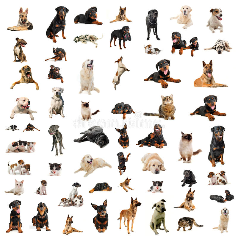 Hunde, Welpen und Katzen lizenzfreies stockfoto