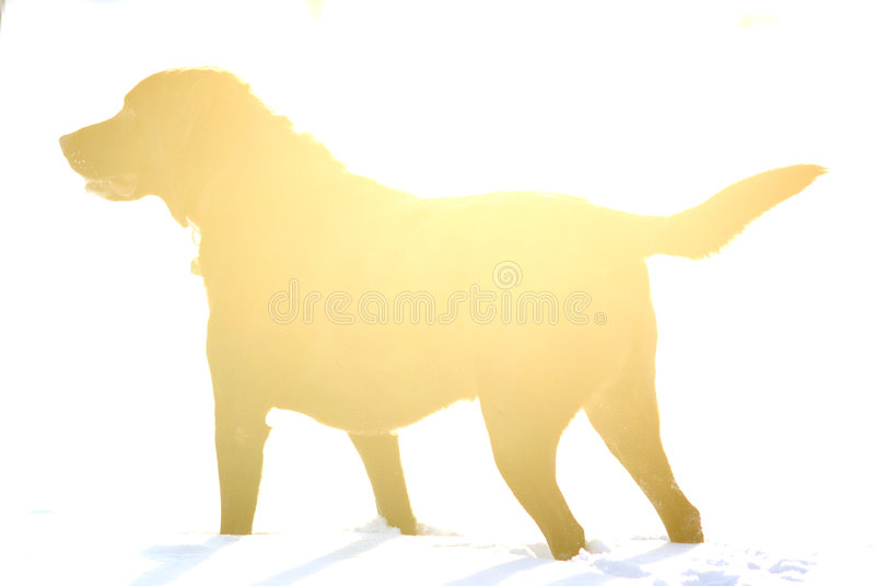 Hundeabbildung lizenzfreie stockbilder