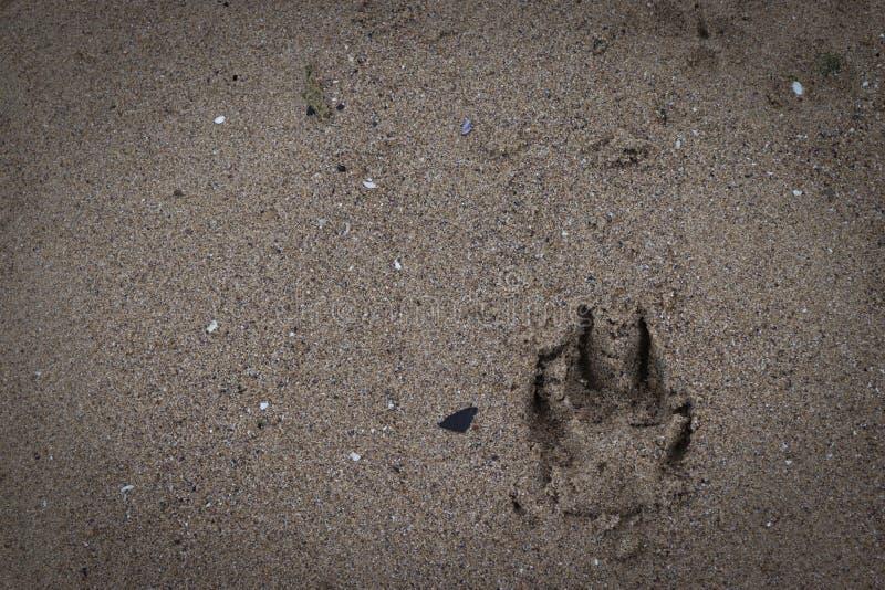 Hundeabdr?cke im Sand lizenzfreie stockfotografie