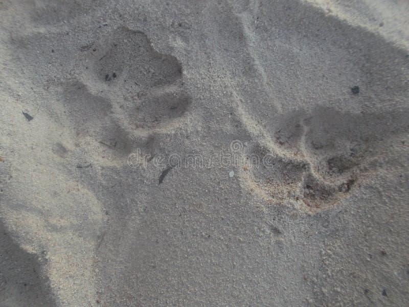 Hundeabdruck im Sand stockfotos