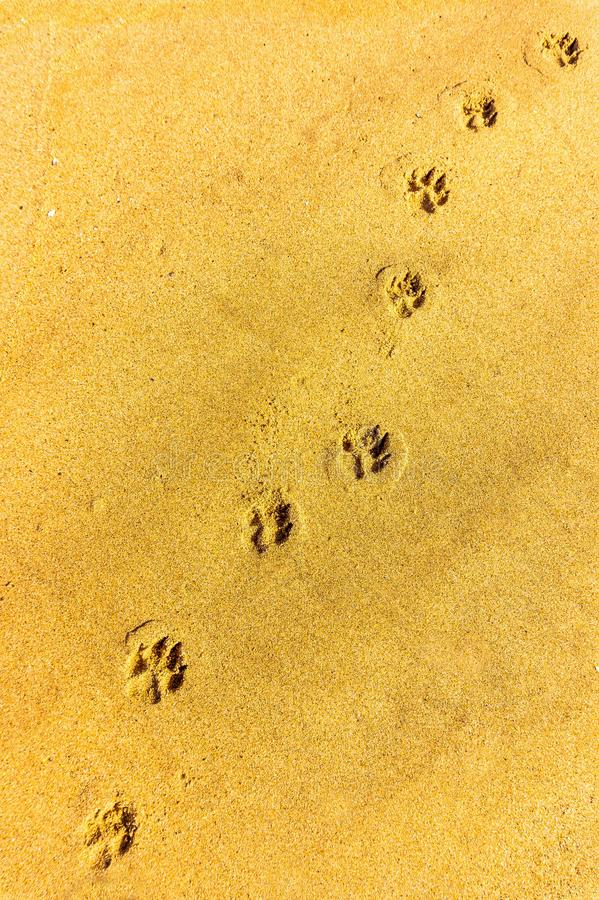 Hundeabdruckbahn entlang einem sandigen Strand lizenzfreies stockfoto