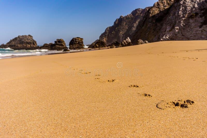 Hundeabdruckbahn entlang einem sandigen Strand stockfotografie