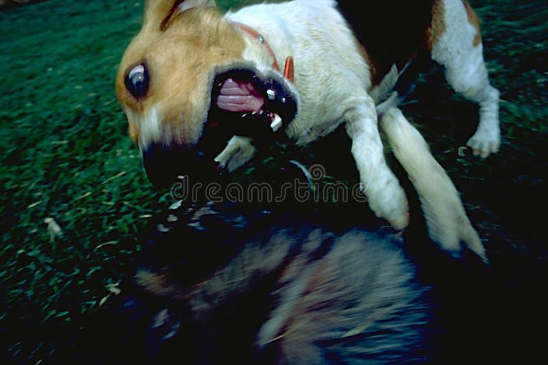 Download Hundeangreifen stockbild. Bild von tier, springen, horizontal - 41145