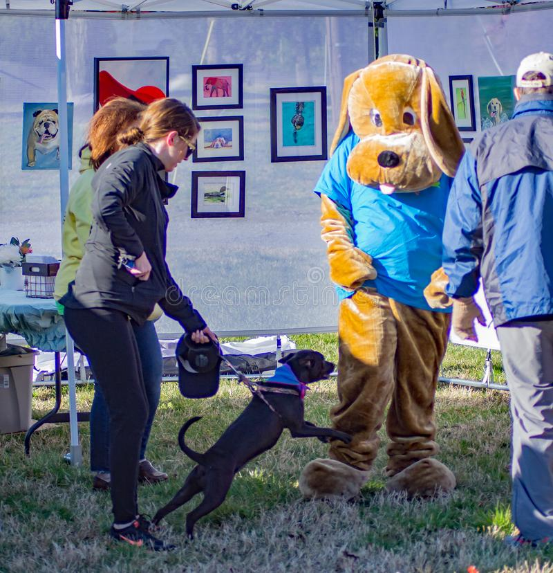 Hundeangreifendes Maskottchen das jährliche Endstück-Geleitboot Roanoke-Tal-SPCA 5K lizenzfreie stockbilder
