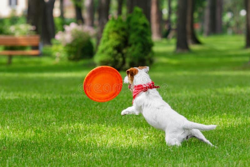 Hundeanziehender Frisbee lizenzfreies stockfoto