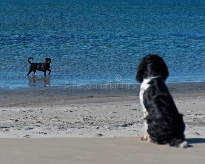 Hundeaufpassender Badegasthund lizenzfreie stockfotos