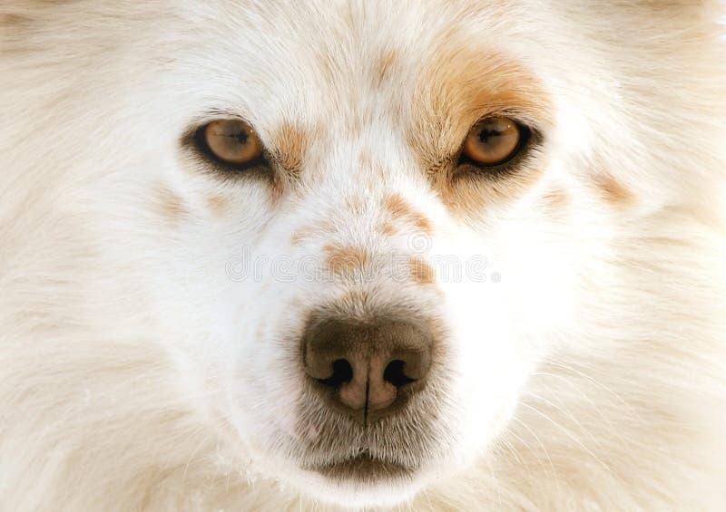 Hundeaugen lizenzfreie stockbilder