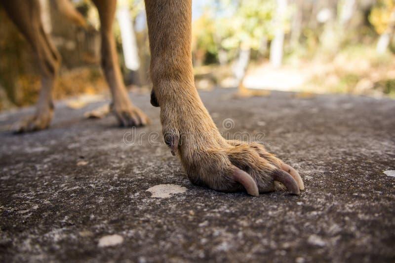 Hundebeine stockfotografie